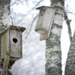 Foto de Stock  : Bird hboxes
