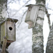 Foto Stock: Bird hboxes