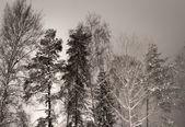 Grove i vinter — Stockfoto