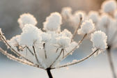 Plant with ice crystals — Stock Photo