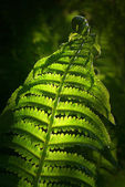 Fern in spring — Stock Photo
