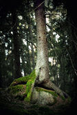 Spooky tree with moss — Stock Photo