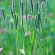 Back lit grass — Stock Photo