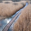 Boardwalk path in wetland — Stock Photo