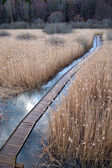 Promenade pad in wetland — Stockfoto