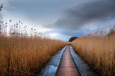 Wooden pathway in wetland — Stock Photo