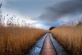 Wooden pathway in wetland — Stock Photo