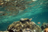 Idea de color con reflejosu altında açık mavi sularda balıklar ile gösterilen vurdu — Stok fotoğraf