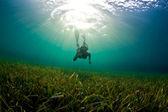 Sea grass Snorkeler — Stock Photo