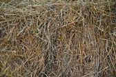 Hay texture background — Stock Photo
