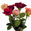 Stock Photo: Roses in posy