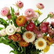 Stock Photo: Posy of dried multicolor flowers