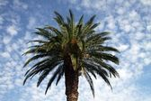 Palm tree against blue sky — Stockfoto
