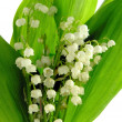 Lily-of-the valley — Stock Photo