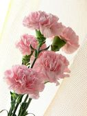 Posy of pink carnations — Stockfoto