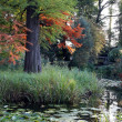 View of botanic garden at autumn - Foto de Stock  