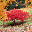 Stock Photo: Tree in autumn japanese garden