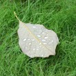 Autumn leaf on green grass — Stock Photo #10505259