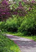 Bir yol bir bahar parkı — Stok fotoğraf