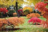 Autumn Japanese garden — Stock Photo