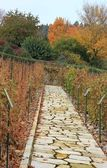 Paved path in a vineyard — Stock Photo