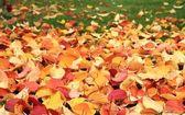 Autumn leaves on green grass — Stock Photo