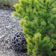 Still life with coniferous tree and decoration — Stockfoto #8965379