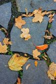 Leaves lie on a paved road — Stock fotografie