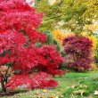 Trees in japanese garden — Stockfoto #9196541