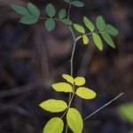 ett rep med blad på bakgrund av torrt gräs — Stockfoto