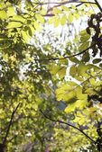 Abstract of leaves and branches in the forest — Stock Photo