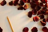 在阳光下的玫瑰花瓣 — 图库照片
