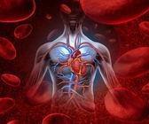 Mänskliga hjärtat blodet system — Stockfoto