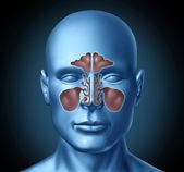 Cavidade nasal humana sinusal, com cabeça humana — Foto Stock