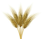 Wheat design — Stock Photo