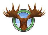 Moose Head Front — Stock Photo