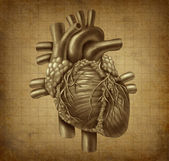 Grunge Human heart — Stock Photo