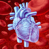 Heart Blood Flow — Foto Stock