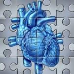 Постер, плакат: Human Heart Puzzle