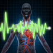 Stock Photo: ECG and EKG Cardiovascular System