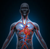Human Heart Circulation — Foto Stock