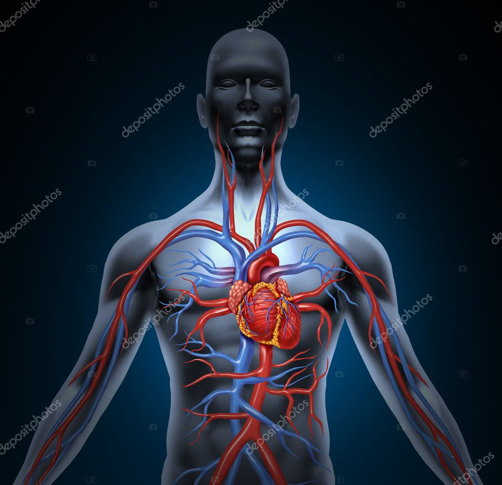 How Many Muscles Does The Human Body Use To Balance Itself When Standing Still further Lymphatic system further Human Nutrition 18062602 moreover 238273 further Digestive System Explained In 6 Minutes. on how does the human body circulatory system