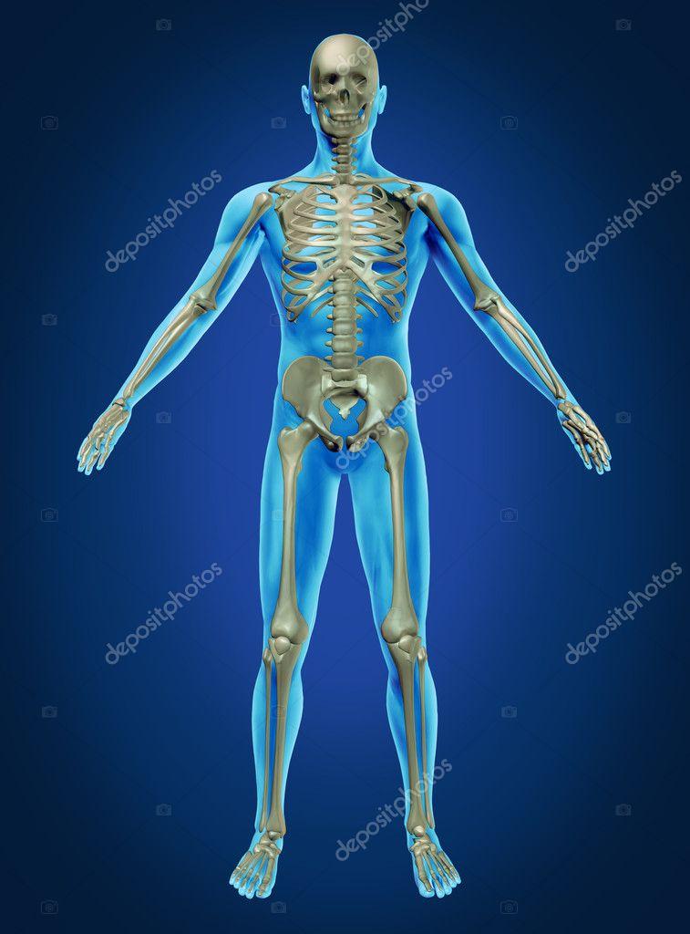 Skeletal human anatomy current event | Custom paper Help ...