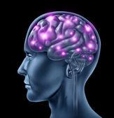 Human Brain Intelligence — Stock Photo