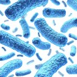 Bacterium and Bacteria - Stock Photo