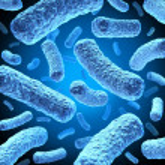 Bacteria — Stock Photo #9360359