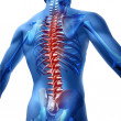 Stock Photo: Back Pain In HumBody