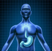 Stomach And Human Digestion — Stock Photo