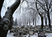 Cemetery in winter — Stock Photo