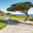 Garden on the coast Portugal. — Stock Photo